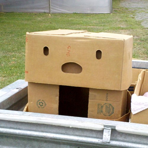Box-pareidolia