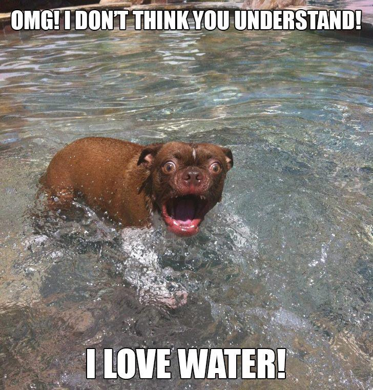 Funny-dog-I-love-water