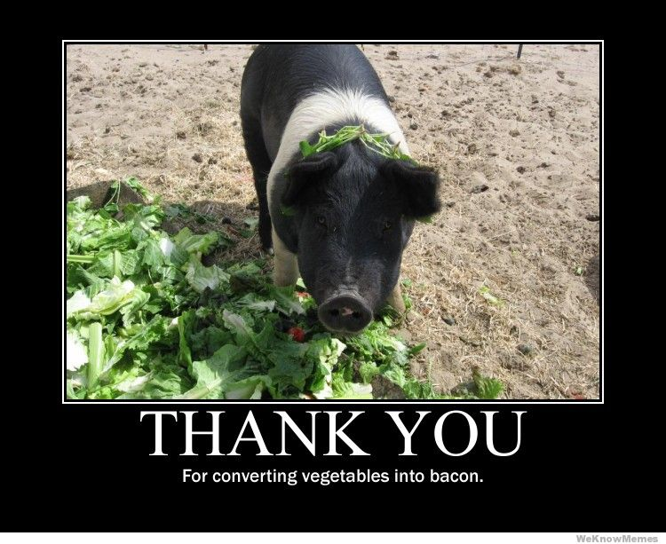 thank-you-for-converting-vegetables-into