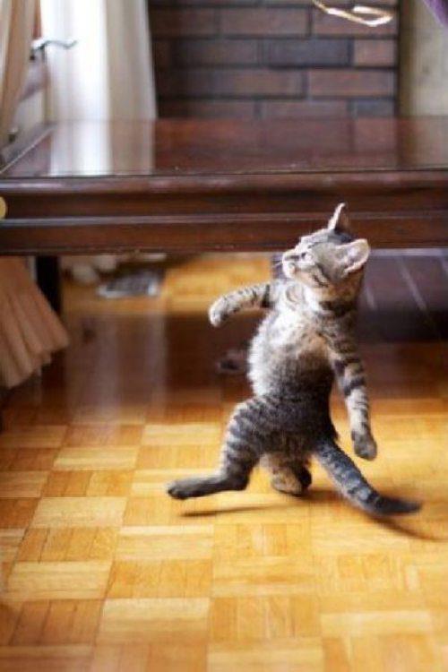 Was kann ich machen wenn meine katze rollig ist