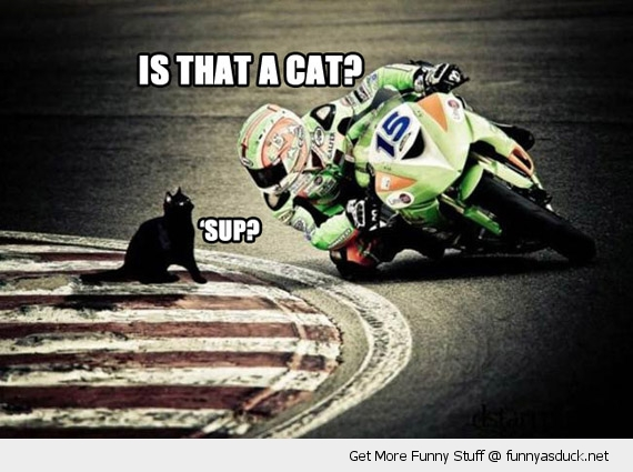 funny-motorbike-racer-cat-track-sup-pics