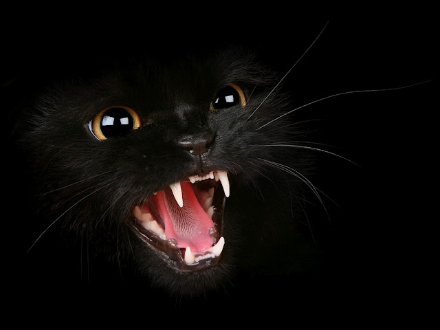 2a90a7 Black Cat Wallpapers 2