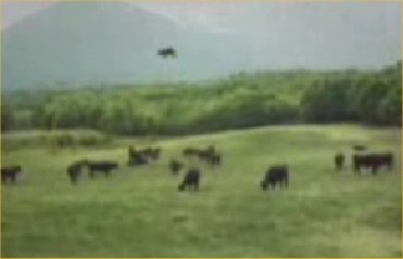 ufo-cow-abduction