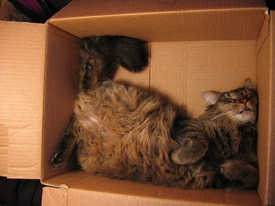 cat-in-a-box-17