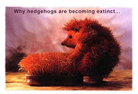 9-hedgehog-extinction-problem