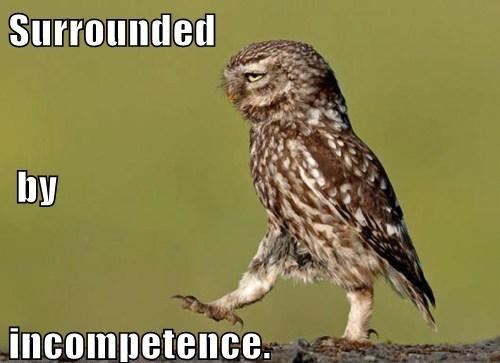 funny-photo-captions-owl-walking-is-surr