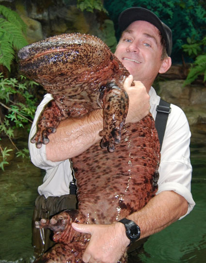 bb-japanese-giant-salamander