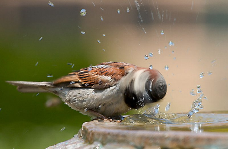 bird-shaking-off-water-slow-motion