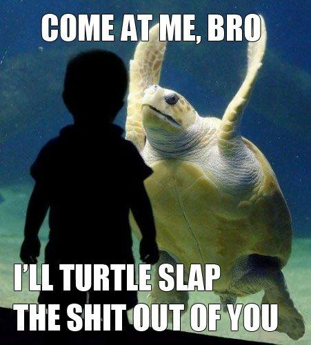 66209d came-at-me-bro-turtle-slap