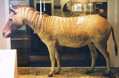 Quagga-london