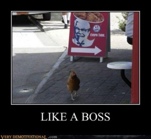 f249f6 like-a-boss-funny-picture-300x276