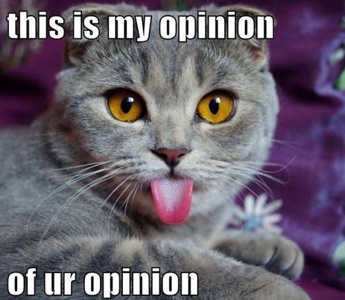 t8fadc4_caturday_cat_memes_13.jpg?bc