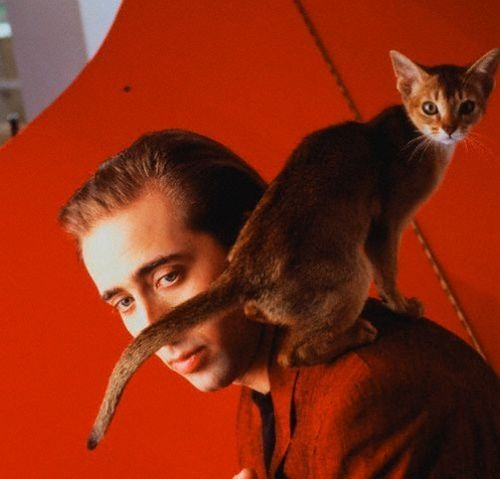 celebrities and cats 22
