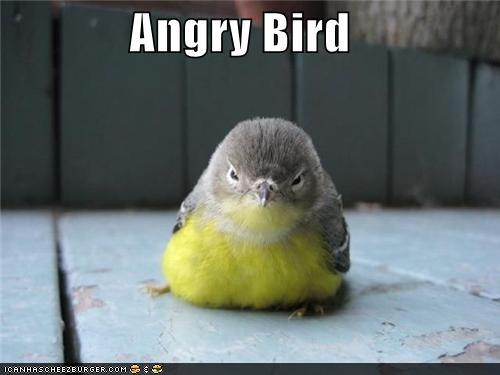 t92IkfC funny-pictures-angry-bird