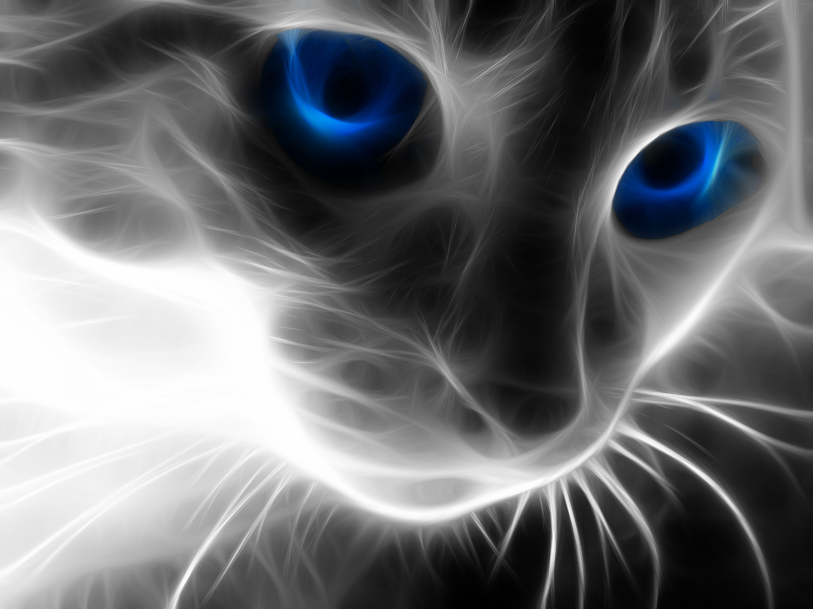 Lucy Cat Zwei