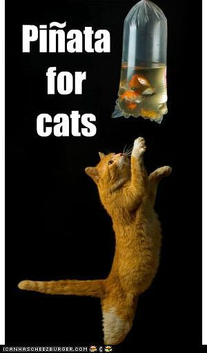 t941X7J funny-pictures-pinata-for-cats