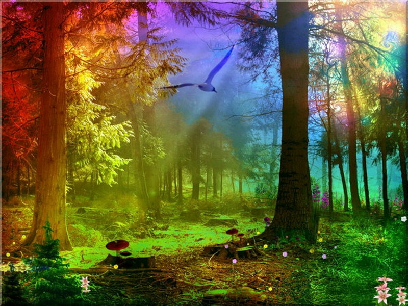 Rainbow Forest by Stroody