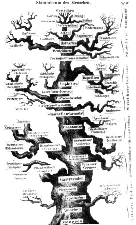 Afbeelding Egel Kleurplaat 40 Fragen An Evolutionisten Seite 4 Allmystery