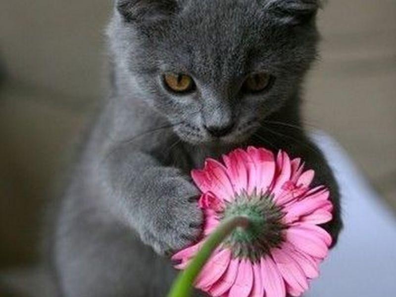 Single frauen und katzen