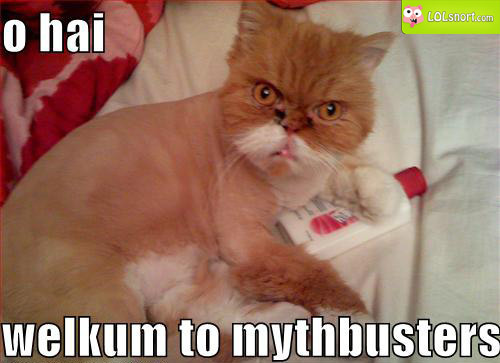 myth-busters-cat