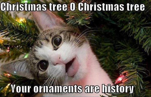 t9gKXWg your-ornaments-are-history-cat