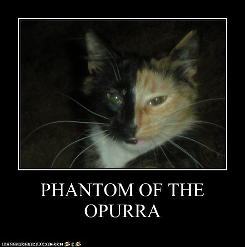 tBquZlh funny-pictures-phantom-of-the-opurra