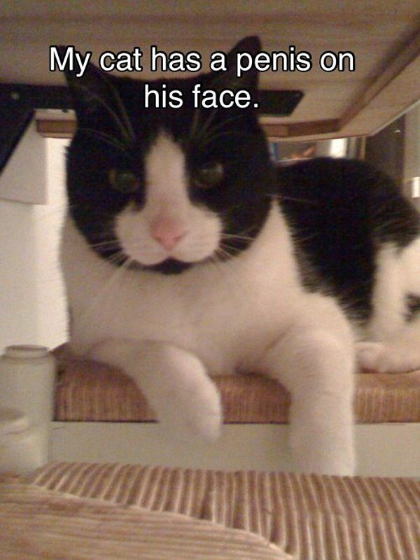 tCJMYId my-cat-has-a-penis-on-his-face