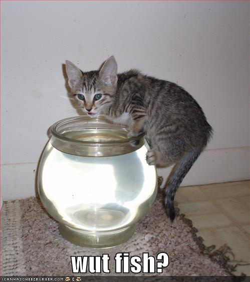 tD8dM4E funny-pictures-cat-drinks-fishbowl