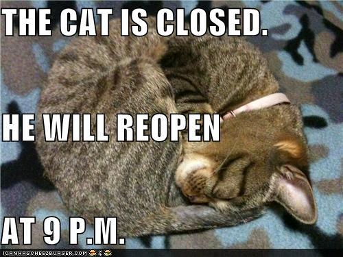 tEoEqZQ funny-pictures-the-cat-is-closed-he-will