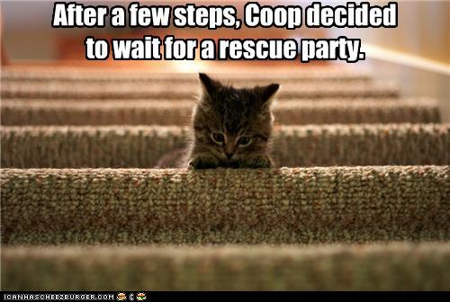 tFG4sZZ funny-pictures-after-a-few-steps-coop-de