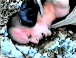 Cannibal holocaust schildkröte