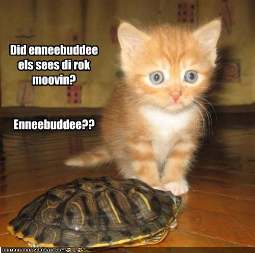 tM1Pxr5 funny-pictures-cat-thinks-turtle-is-a-ro