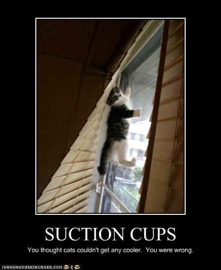 tPQPe9M funny-pictures-suction-cups1
