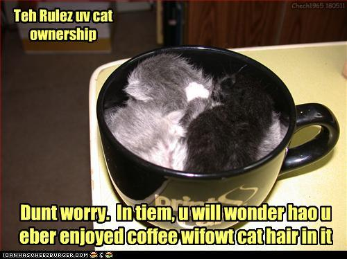 tQRTWX8 funny-pictures-teh-rulez-uv-cat-ownershi