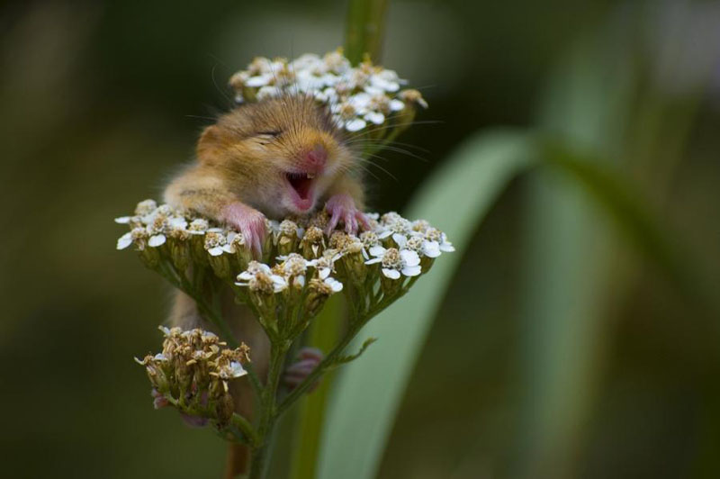 tQScw0h hamster-loves-flowers