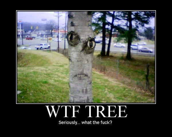 tQn8W9V wtf tree Even More Motivational Pictures.jpeg