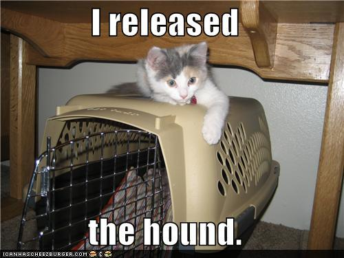tRJ36Gq funny-pictures-i-released-the-hound