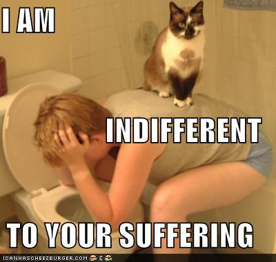 tSkbzj2 funny-pictures-cat-is-indifferent