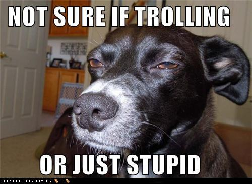 tUOjlF9 funny-dog-pictures-not-sure-if-trolling-