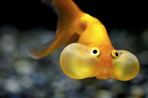 Die sch nsten tiere tierbilder der welt seite 36 for Fish and pets unlimited