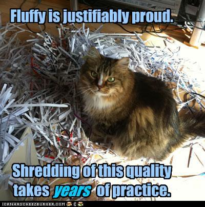 tUk0BYb funny-pictures-fluffy-is-justifiably-pro