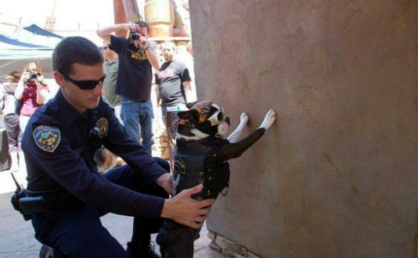 tWJLzAk biker-boston-terrier-and-a-cop