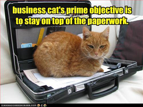 tWpkbUU funny-pictures-business-cats-prime-objec