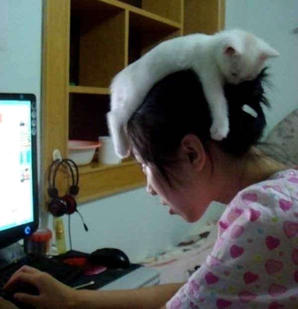 tWrUVF7 kitten-on-girls-head