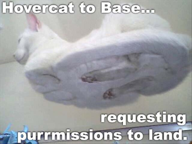 tYQL0YT funny-pictures-hover-cat-funny-cat-pictu