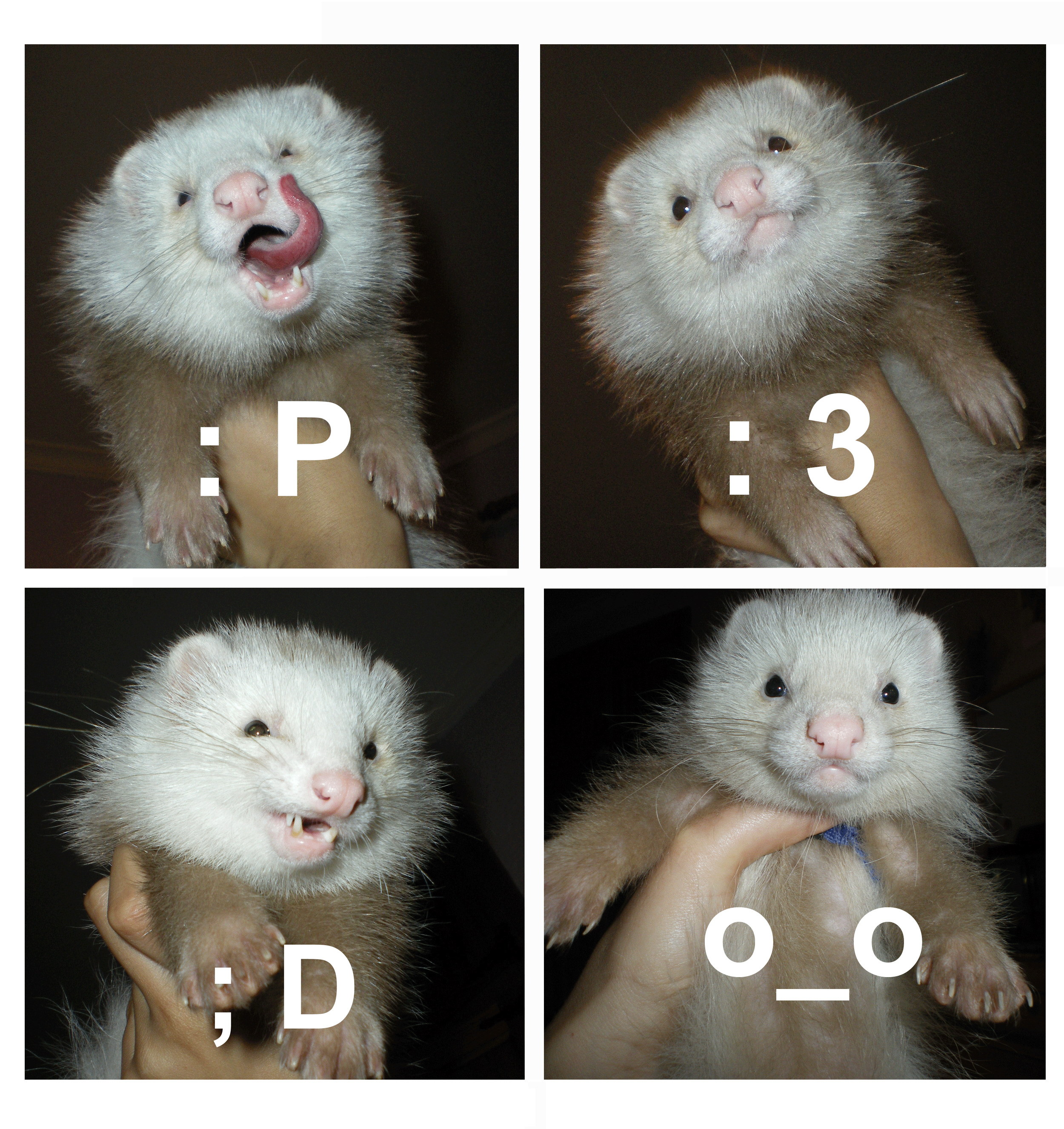 t208e78 Ferret Collage by Silsuka