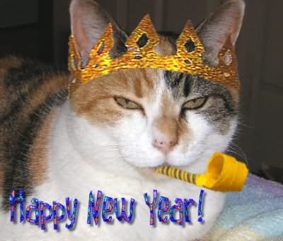 happy-new-year-cat-with-crown-graphic