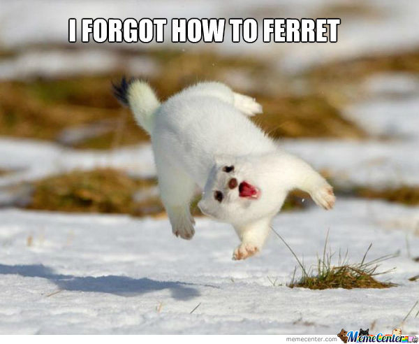 1---i-forgot-how-to-ferret o 1190234