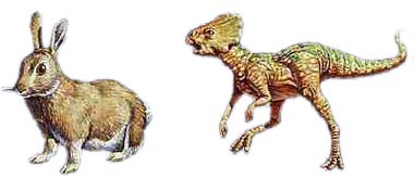 ta6CmNG microceratops