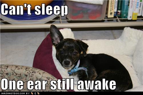 funny-dog-pictures-cant-sleep-one-ear-st